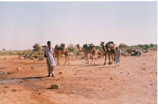 camelsafari6