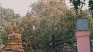インド旅行記 仏教聖地ブッダガヤとスジャータ村