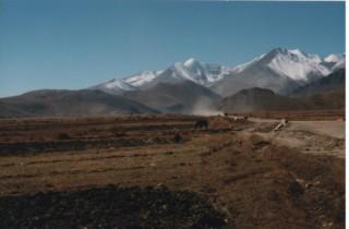 himaraya4