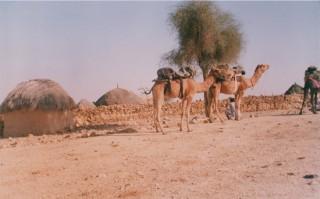 camelsafari1