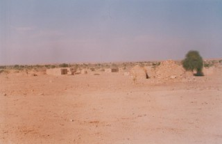 camelsafari2