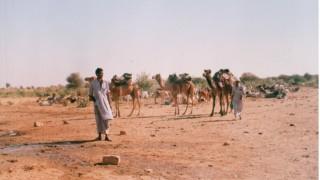 インド旅行記 ジャイサルメールのキャメルサファリ