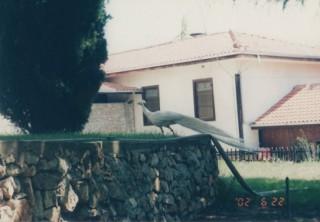 macedonia11